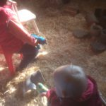 In het hok van de cavia's op de kinderboerderij.