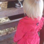 Oog in oog met een geit.
